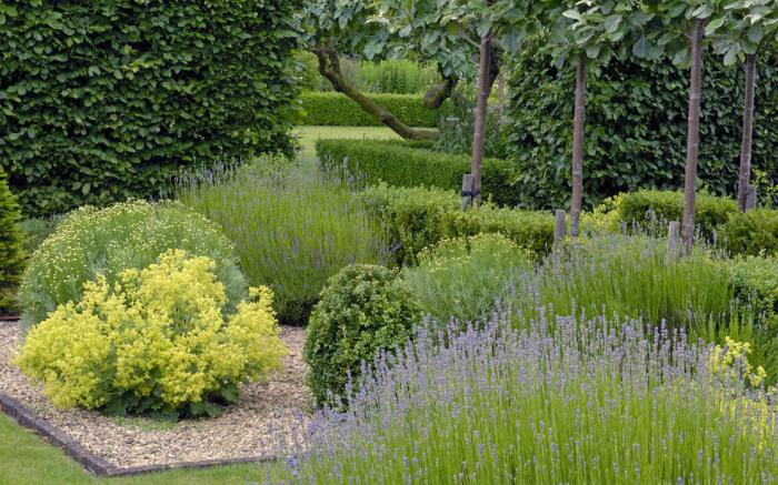 Jardines con poco mantenimiento ecohouses for Jardines de bajo mantenimiento