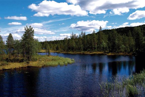 Habitatge i natura